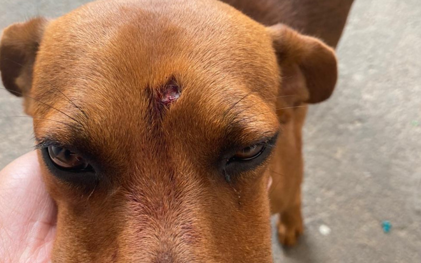 Homem é preso suspeito de atirar com chumbinho em cachorro; flagrante é 1º em Goiânia após nova lei de maus-tratos, diz OAB