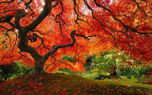 As 16 árvores mais lindas do mundo! - Casa Vogue | Curiosidades