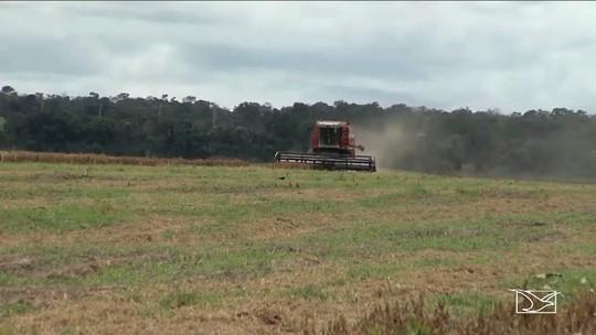Produtores colhem super safra de grãos no Sul do Maranhão