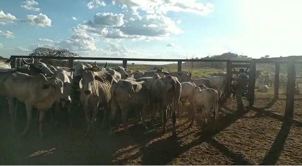 Animais foram encontrados em fazenda de Imperatriz — Foto: Polícia Civil/Divulgação