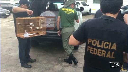 Polícia Federal realiza operação em combate a crimes ambientais em São Luís