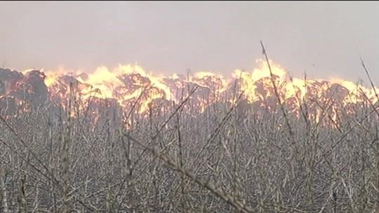 Tempo seco e vento agravam efeitos das queimadas junto a rodovias