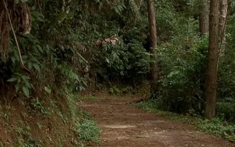 Trilha no Parque Estadual da Cantareira  — Foto: Reprodução/ TV Globo