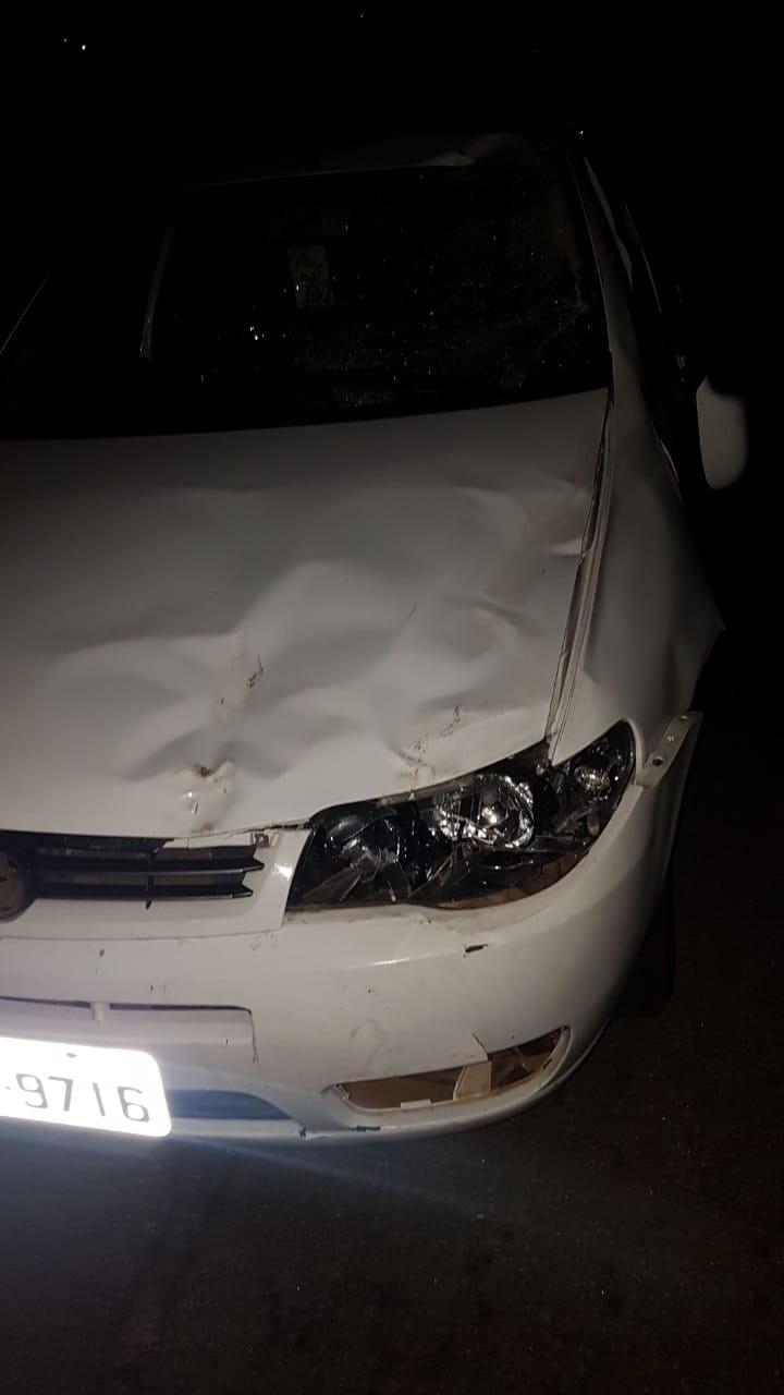 Cavalo morre atropelado por caminhão e acidente causa engavetamento na Rodovia Santos Dumont - Notícias - Plantão Diário