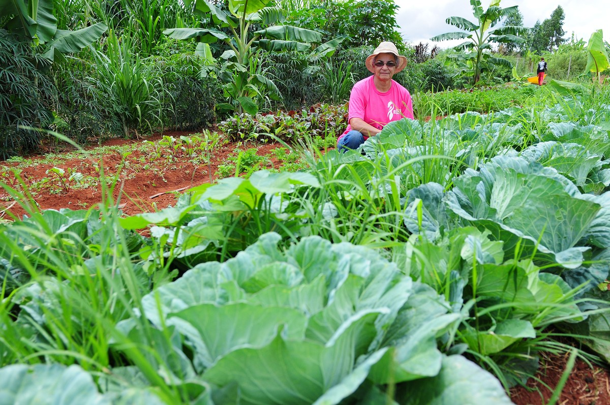 Atividade rural sem agrotóxicos é regulamentada no DF