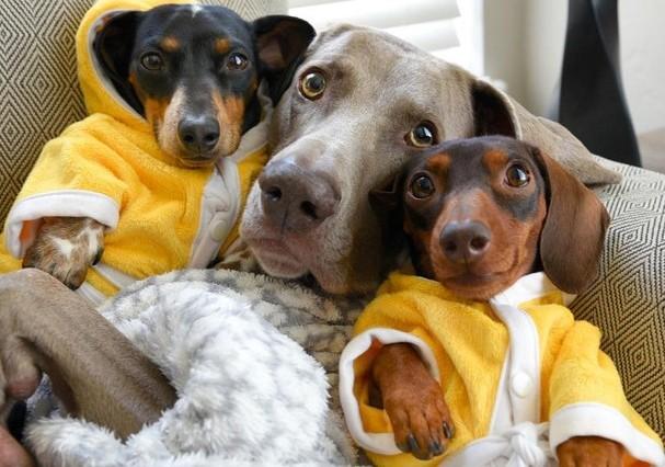 Cachorros (Foto: Instagram/Reprodução)
