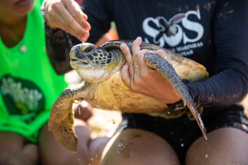 Pesquisadores do Projeto Tamar fazem monitoramento de tartarugas na Praia do Porto, em Noronha. Ação é aberta ao público — Foto: Fábio Tito/G1