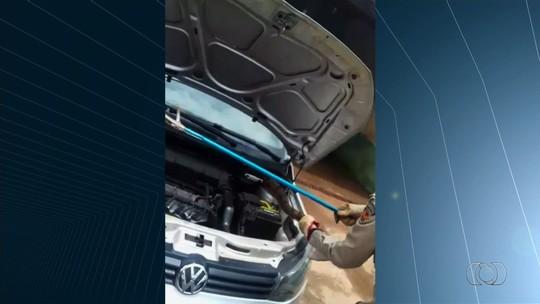 Jiboia é encontrada dentro de motor de carro, em Goiatuba