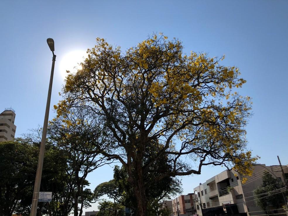 Climatempo aponta semana de muito sol nem Uberlândia — Foto: Melissa Ribeiro/Arquivo Pessoal