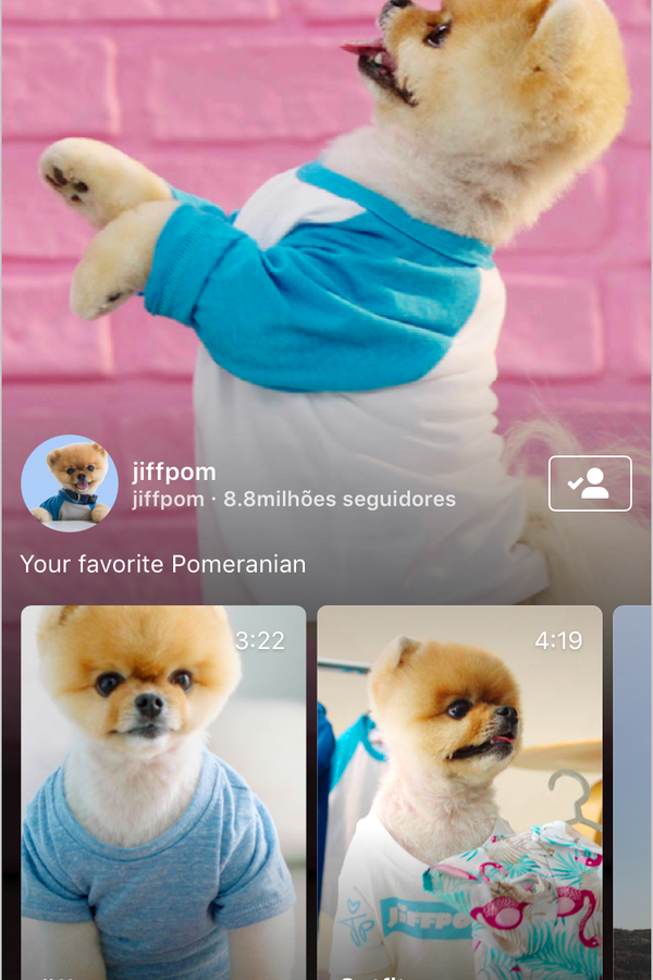 Vai ter vídeos de cachorrinho fofo, sim!  (Foto: Divulgação)