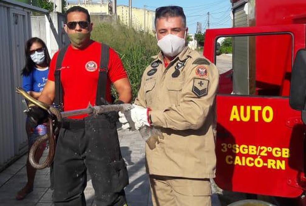 Bombeiros fizeram resgate da cobra em residência e a soltaram em área de mata na sequência — Foto: Divulgação