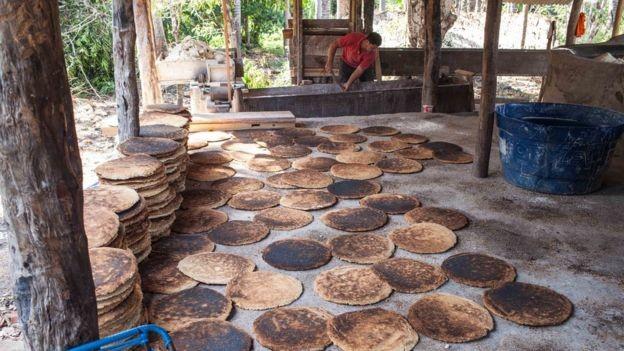 Depois de ralada, a polpa da mandioca é assada em forma de grandes 'tortas' chamadas bijus (Foto: Dubes Sonego Junior/via BBC News Brasil)