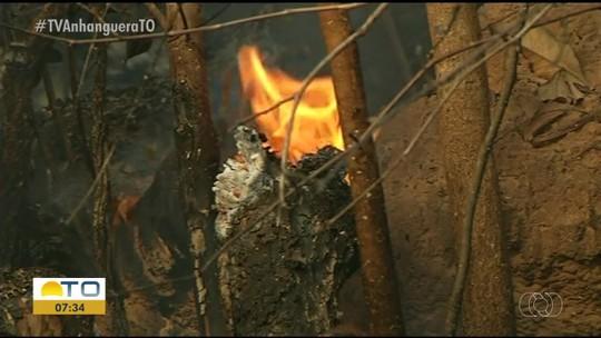Fazenda tem pastos destruídos e animais mortos por incêndio; dono suspeita de ato criminoso