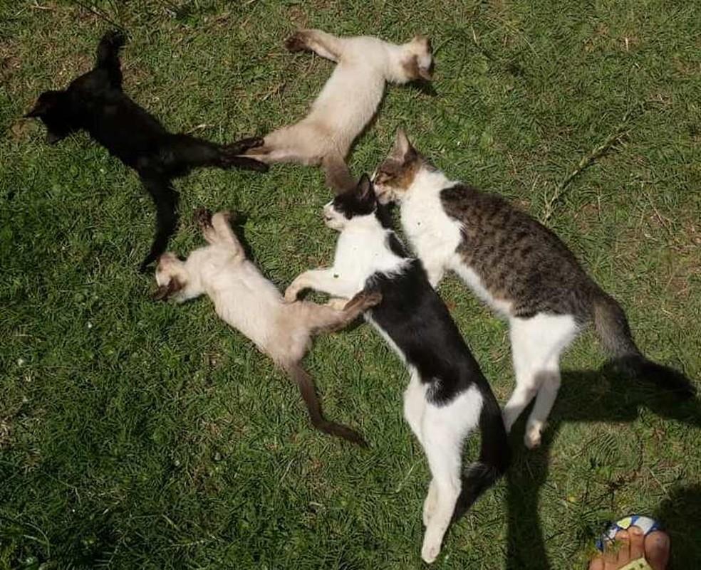 Voluntários denunciam envenenamento de gatos em Salinópolis. Oito morreram, segundo a Polícia. — Foto: Reprodução / Abrigo Amo Animal