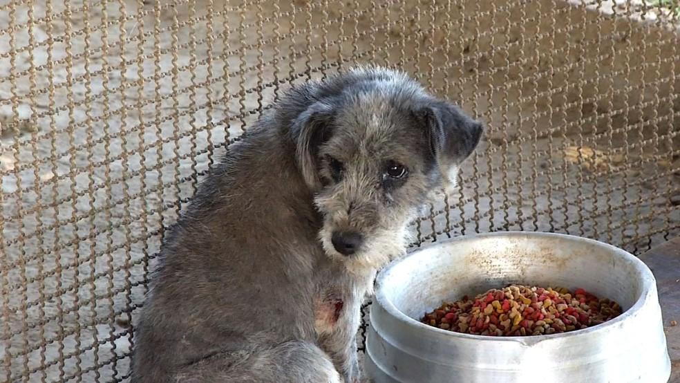 Porto Real está promovendo a adoção de animais — Foto: Reprodução/TV Rio Sul