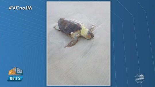 Tartaruga marinha é achada morta em Ilhéus e ONG aponta outros 12 casos em uma semana, na região sul da BA