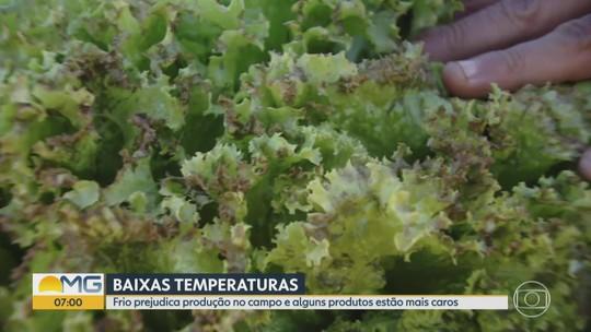 Baixas temperaturas prejudicam produção de alimentos