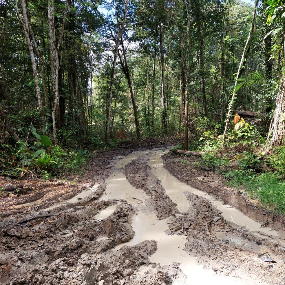Ramais são feitos por madeireiros ilegais dentro de área de floresta no Pará. — Foto: Reprodução / Embrapa Amazônia Oriental