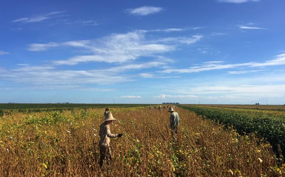 Agricultores são vistos em uma plantação de soja em uma fazenda em São Desidério, na Bahia — Foto: Roberto Samora/Reuters