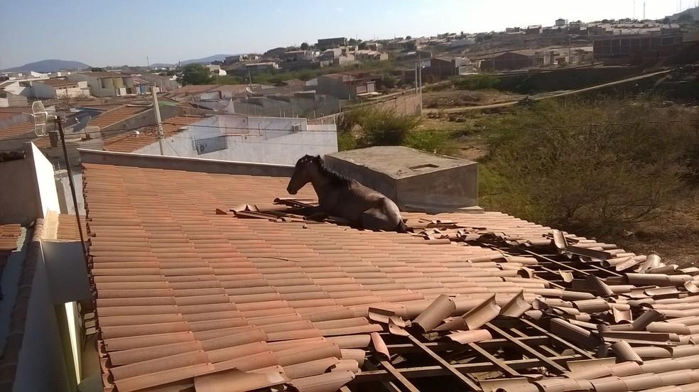Em 2015, cavalo foi parar em cima de telhado de casa após 'errar' caminho em Cajazeiras, na Paraíba (Foto: Soldado Cícero Segundo / Corpo de Bombeiros)