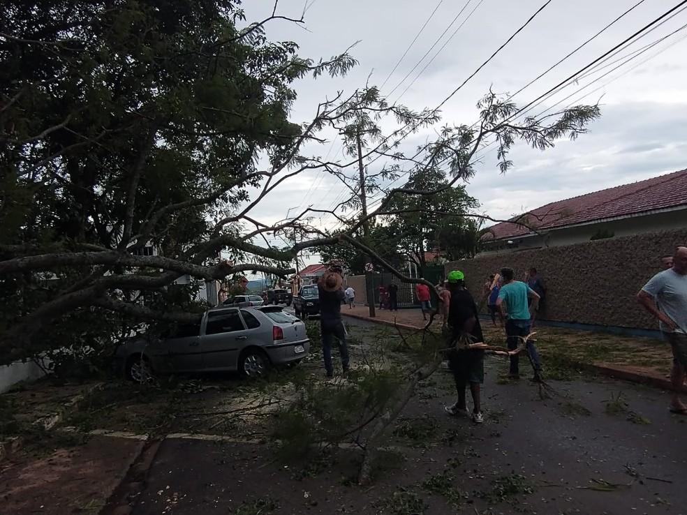 Defesa Civil, prefeitura e voluntários cortaram árvore para liberar trânsito em Bocaina — Foto: Defesa Civil/Divulgação