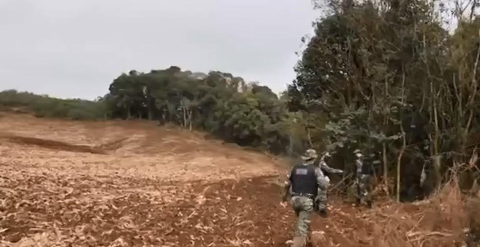 Em Almirante Tamandaré, na Região de Curitiba, a polícia encontrou uma dessas áreas que desapareceu para dar lugar à plantação — Foto: RPC/Reprodução