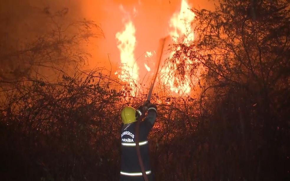 Incêndio atingiu plantações de coco em lotes irrigados das Várzeas de Sousa, na Paraíba (Foto: Beto Silva/TV Paraíba)