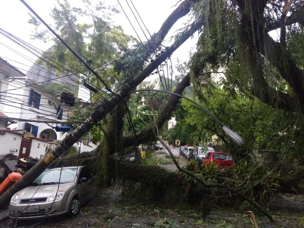 Árvore caída puxou a fiação na Rua Viúva Lacerda, no Humaitá — Foto: Marcos Serra Lima/G1
