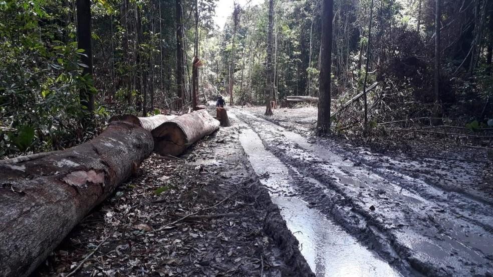 Combate à extração ilegal de madeira não conseguiu impedir a perda de uma área maior que o território da Alemanha na Floresta Amazônica — Foto: Agência Pará
