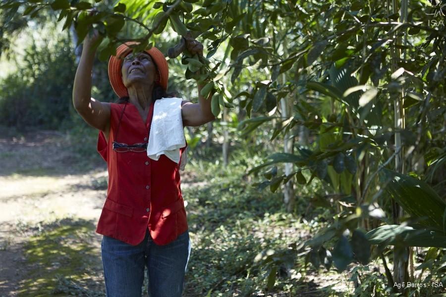Dona Diva, do quilombo Pedro Cubas de Cima, é uma das que sofre com o atraso das licenças.  (Foto: Agê Barros - ISA)