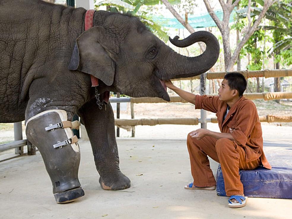 A elefanta Mosha é alimentada em um hospital de elefantes em Lampang, na  Tailândia. — Foto: Bronek Kaminski/Barcroft Media/Getty Images