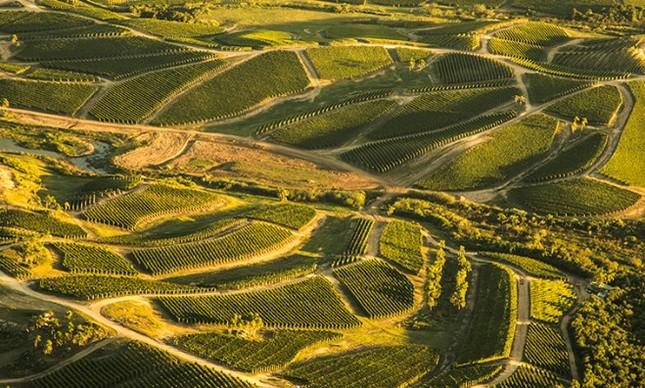 Bodega Garzon: vinho e azeite para o Dia dos Pais
