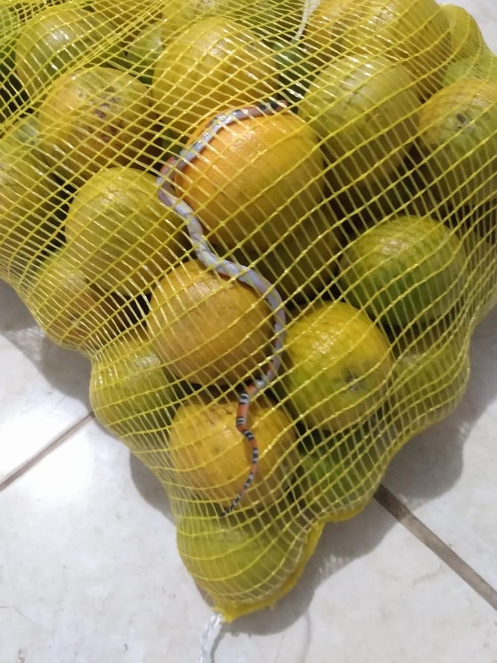 Consumidora de Mogi das Cruzes afirma ter encontrado cobra em saco de laranja — Foto: Lorene Lourenço/ Arquivo Pessoal