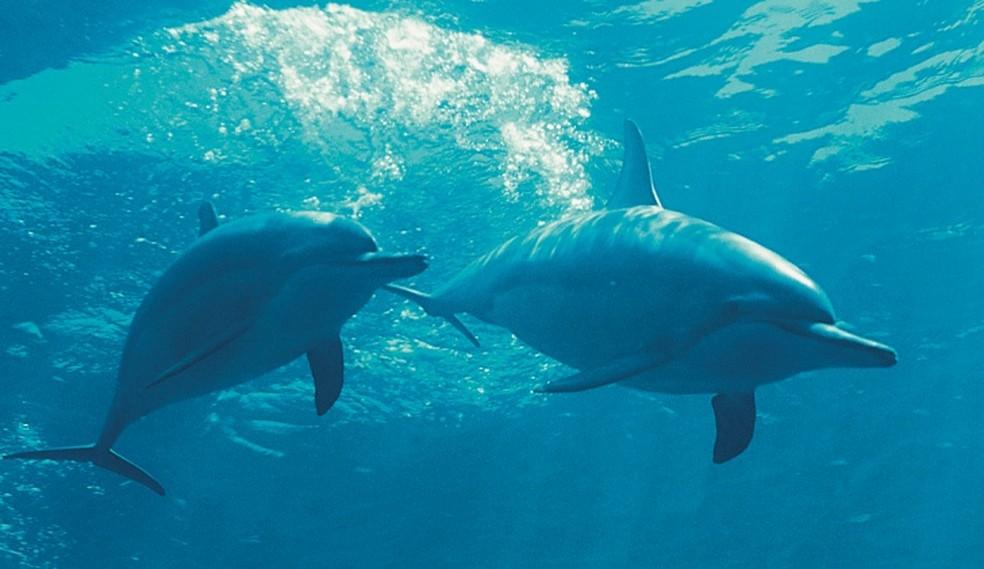 Os golfinhos rotadores estão estudados em Fernando de Noronha  — Foto: José Martins/Projeto Golfinho Rotador