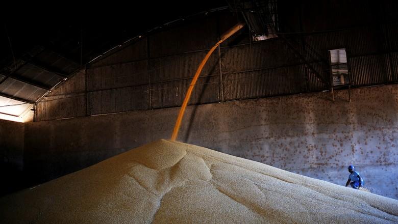 Armazém com milho em Sorriso (MT) (Foto: REUTERS/Nacho Doce)