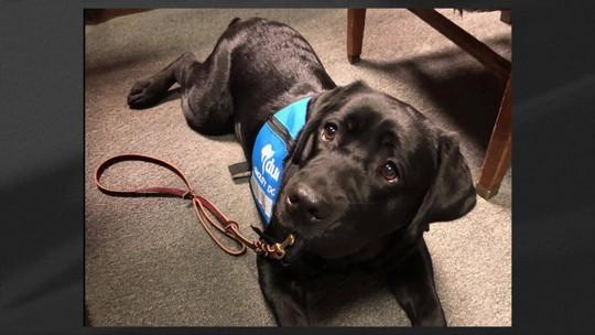 Cachorra 'presta juramento' ao assumir cargo em procuradoria nos EUA