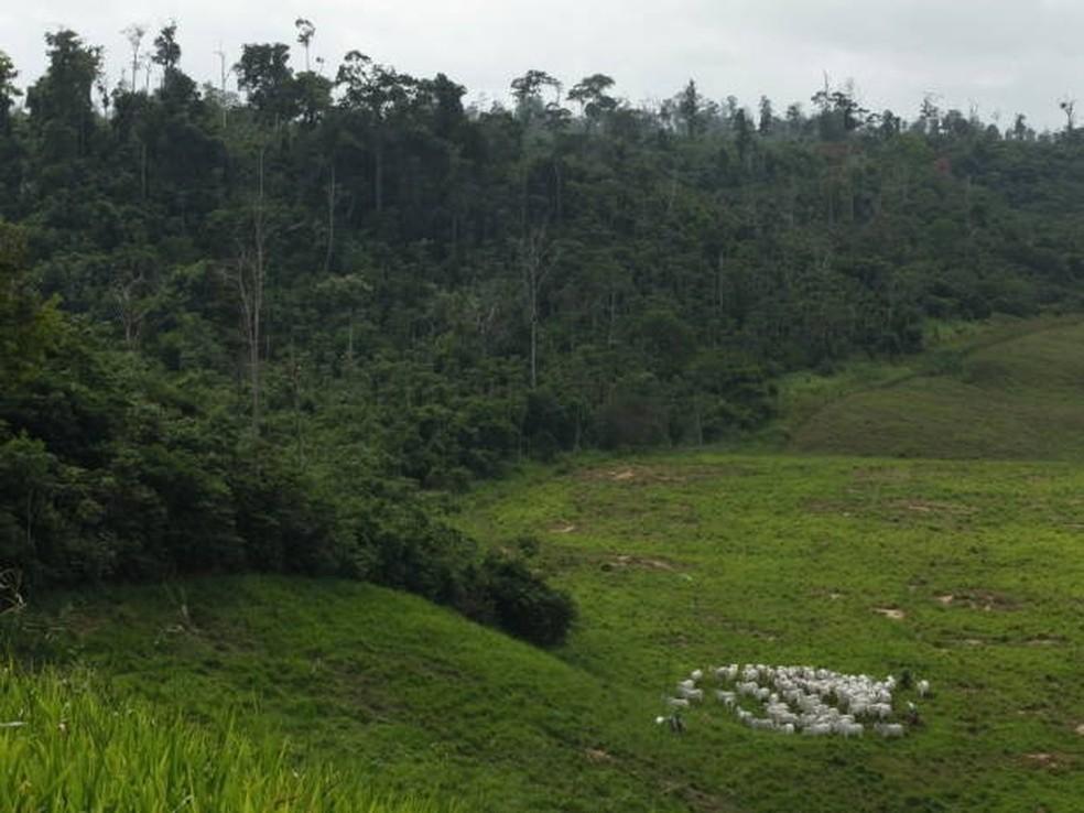 Área de Reserva Legal de uma fazenda do projeto Pecuária Verde, em Paragominas, nordeste do Pará — Foto: Divulgação