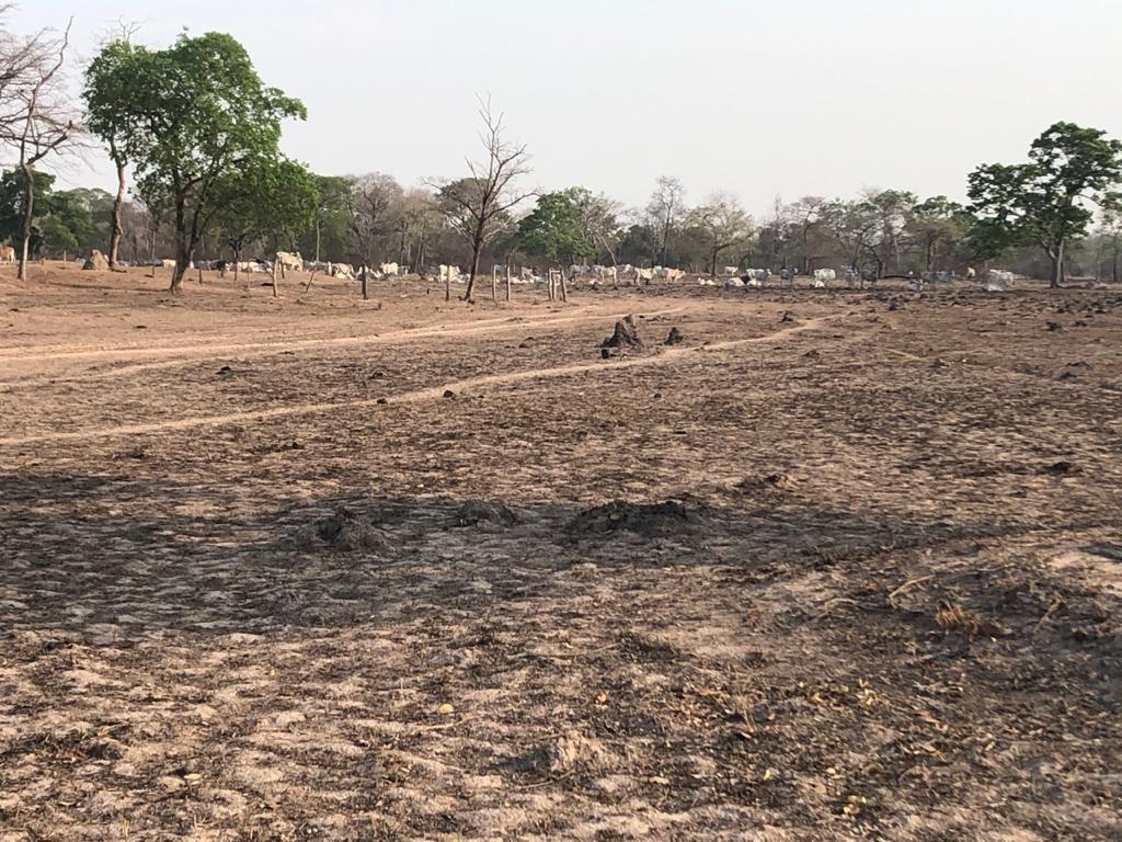 Imagem da fazenda São Francisco da Baía das Pedras, no Pantanal, após queimadas em 2020 (Foto: Francisco Campos/Acervo pessoal)