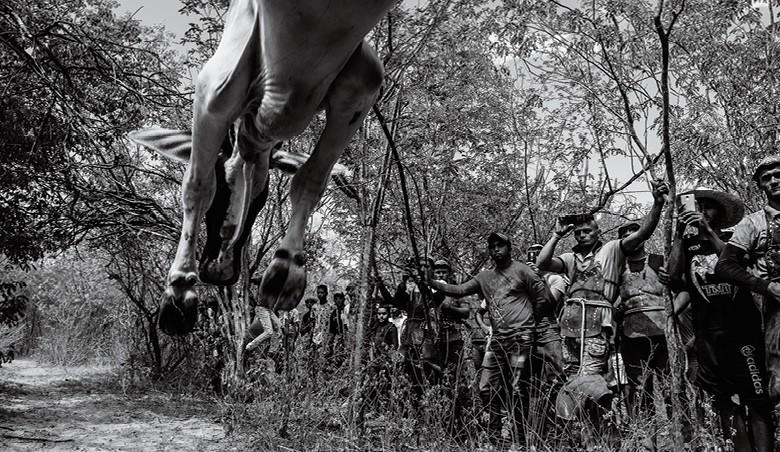 Vaqueiros do Pajeú - o contraponto com a modernidade:  o público registra a corrida da pega de boi em seus celulares (Foto: José Medeiros)