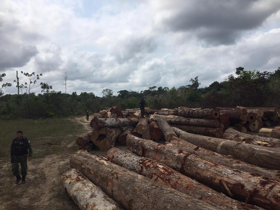 O órgão também apreendeu motosserras, tratores e outros equipamentos usados no corte das árvores. — Foto: Ascom/Semas