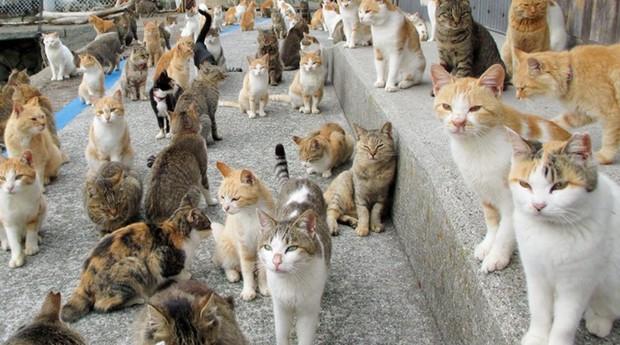 Ilha dos gatos é para os apaixonados pelos felinos (Foto: Reprodução)