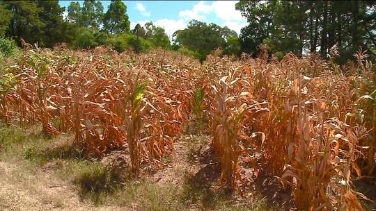 Estiagem no Rio Grande do Sul deixa em estado de emergência 27 cidades