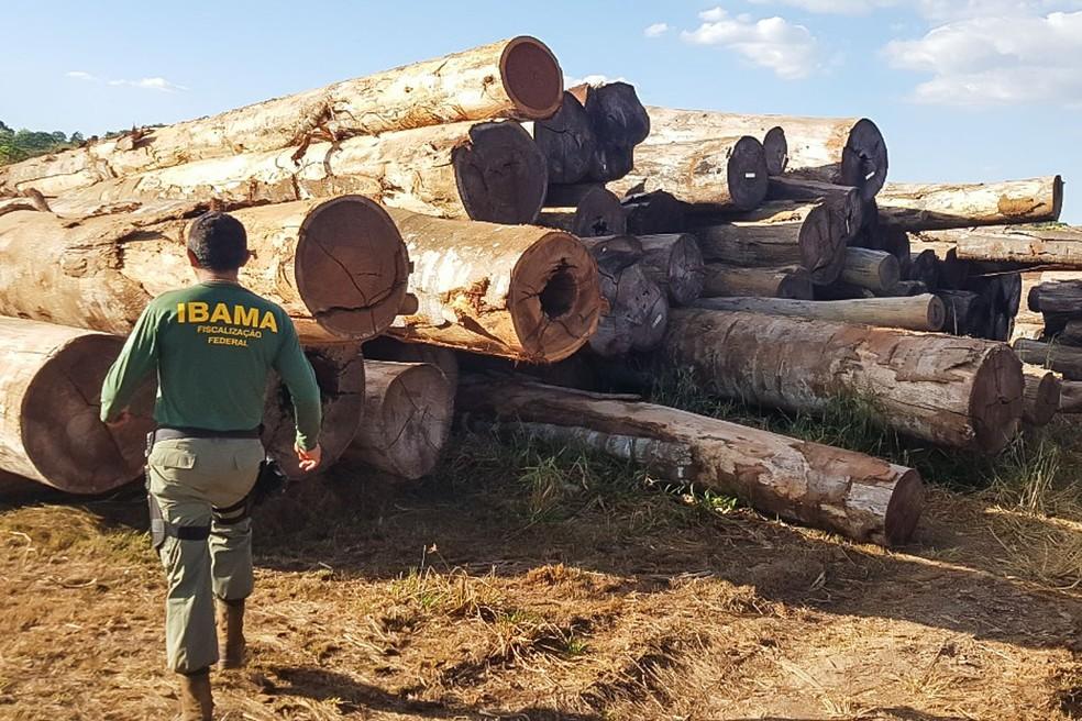 A fraude foi descoberta na etapa mais recente da Operação Estanque; Ibama apreendeu todas de madeira — Foto: Ibama/Assessoria