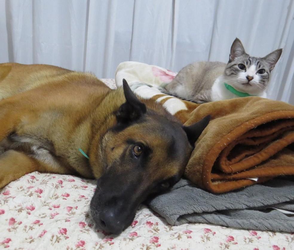 Castração de cães e gatos é gratuita para tutores e protetores que são cadastrados na Rede de Proteção animal de Curitiba — Foto: Alexander Biondo/UFPR
