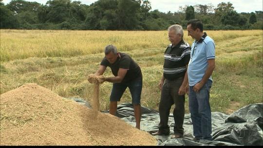 Agricultor de Sousa, na PB, tem a maior produção de arroz vermelho do estado