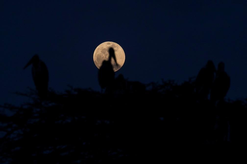 Lua cheia vista antes de eclipse em Marabou, no Quênia. Na foto, satélite aparece enquadrado acima de um ninho de cegonhas. (Foto: Baz Ratner/Reuters)