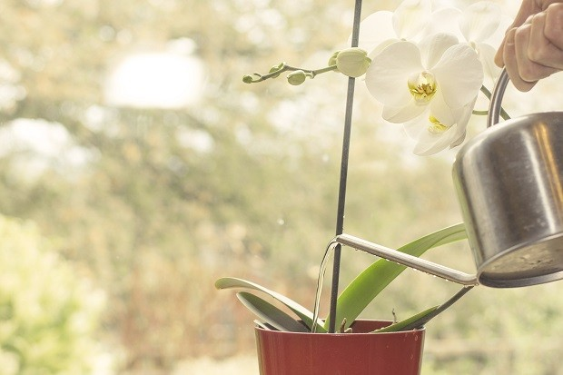Como regar orquídeas (Foto: ThinkStock)