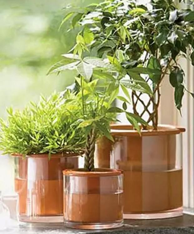 As plantas absorvem a água pelos furos na parte inferior do vaso (Foto: Pinterest/ Reprodução)