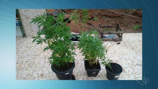 Traficante do RJ é preso com plantação de maconha em casa no ES
