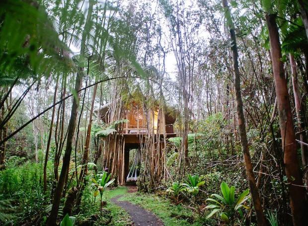 Acompanhe de perto a vida natural no Havaí nesta casa na árvore (Foto: Airbnb/ Reprodução)